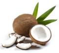 Kokosöl Cocos nucifera