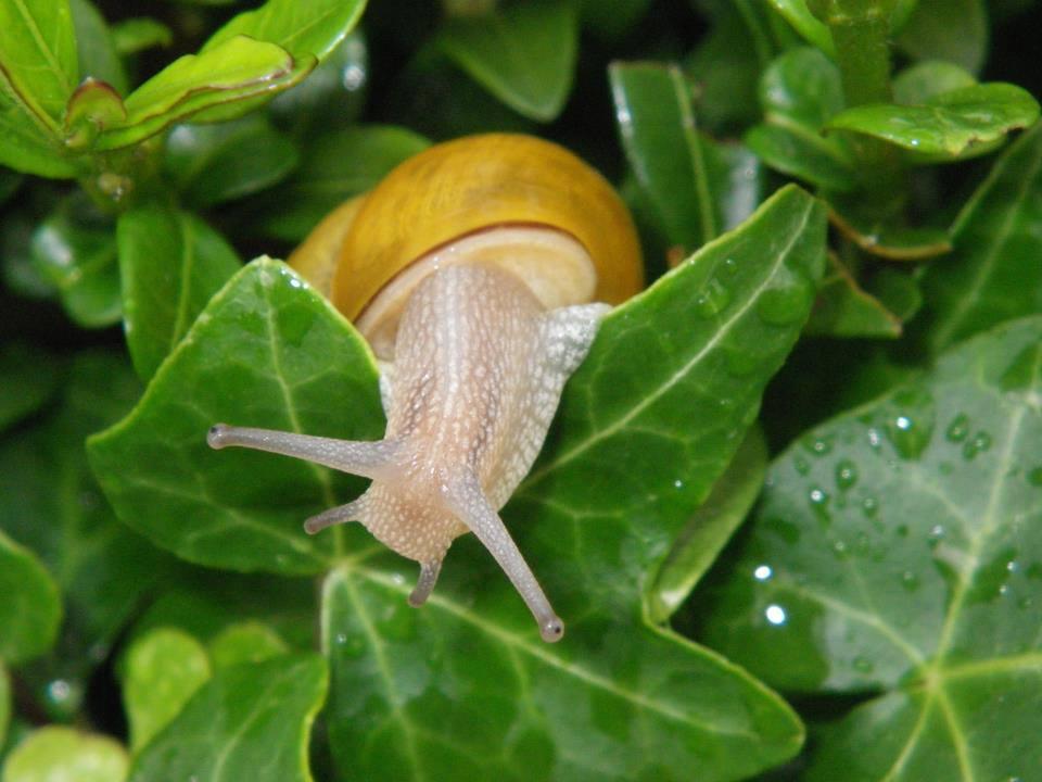 Natürliche Mittel zur Abwehr von Schnecken im Garten
